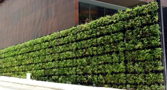 Balcony Plant Balcony Plants Provide The