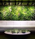 vertical-gardens-inside-and-outside-a-bright-future-for-green-wall-0-459