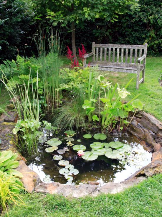 Lily plants in the pond instructions and maintenance for Garden pond building instructions