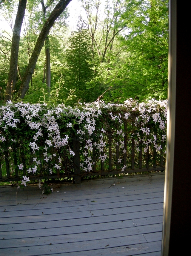Clematis Climbing Plants Tips For Planting Care And Cutting Interior Design Ideas Ofdesign
