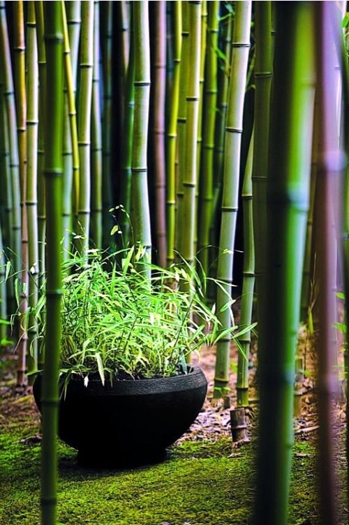 want a bamboo garden to make at home then follow these tips and design a beautiful bamboo garden and decorate your beautiful outdoor courtyard with this - Garden Design Using Bamboo