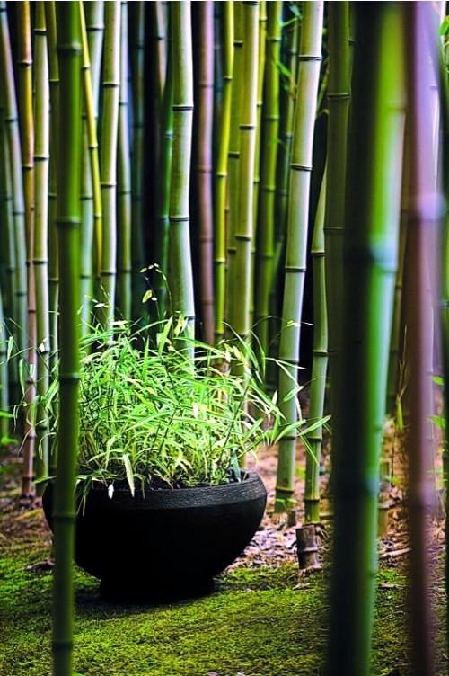 Yes Bamboo garden do at home - important garden design ...