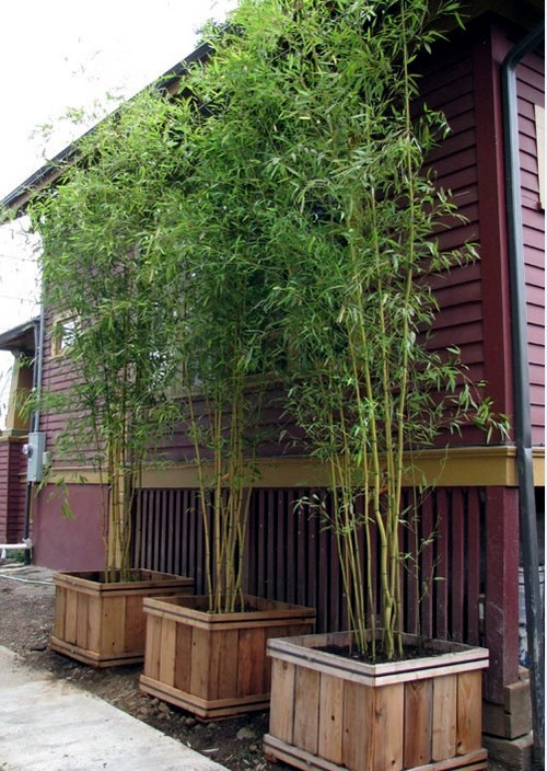 easy bamboo interior decoration. Making bamboo garden itself  first steps Yes Bamboo do at home important design ideas