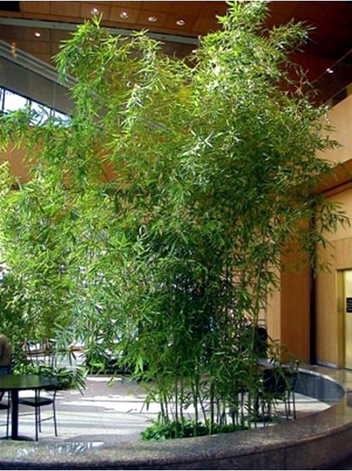 Garden Do At Home Important Design Ideas Interior