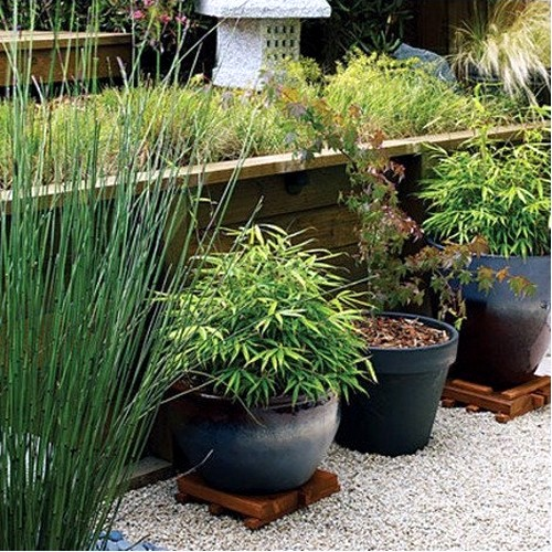 Yes Bamboo Garden Do At Home Important Garden Design