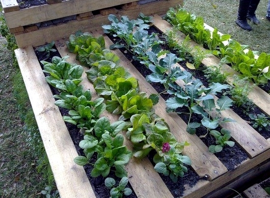 Make a small garden and visually enlarge - Tips and Tricks