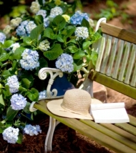 hydrangeas-in-the-garden-tips-for-planting-care-fertilization-cutting-0-516