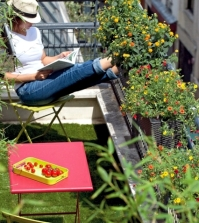 balcony-hardy-plants-plant-and-care-tips-0-523