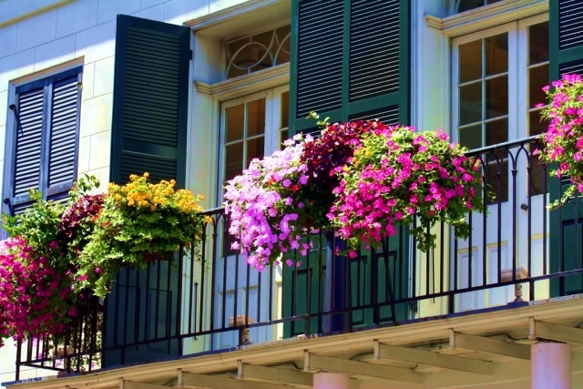 Beautify the balcony with plants 24 ideas for the design for Balcony flowers