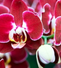 tips-for-beautiful-indoor-plants-orchid-care-0-538