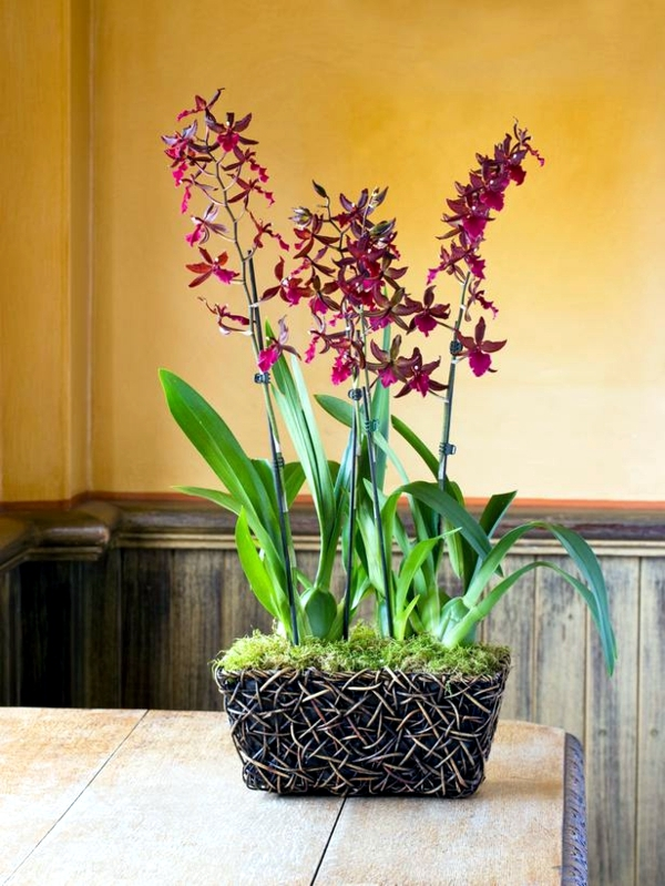 Tips For Beautiful Indoor Plants Orchid Care 1 538 Jpg