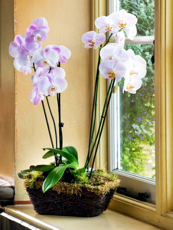 Tips for beautiful indoor plants orchid care interior Beautiful plants for home