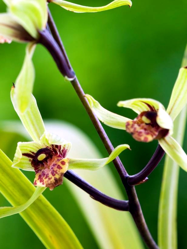 Tips for beautiful indoor plants - Orchid Care