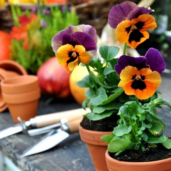 What plants Autumn - Tips for Beginners Garden