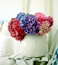 hydrangea-care-tips-and-decorating-ideas-with-beautiful-flowers-0-550