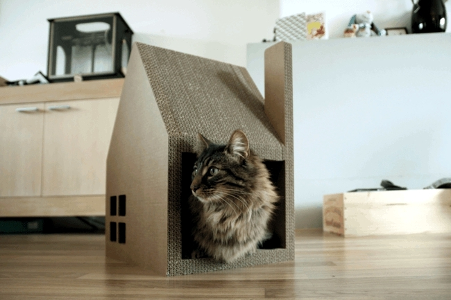 Chat modern house successfully replaced cardboard cat tree interior design ideas ofdesign - Lovely unique exterior design in a childcare with flashy interior ...