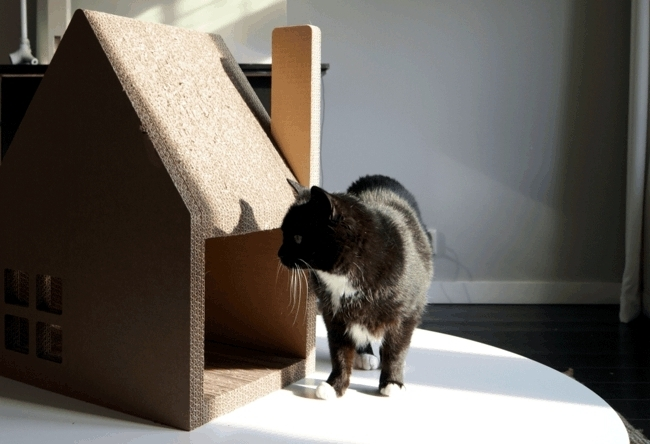 Chat modern house successfully replaced cardboard cat tree