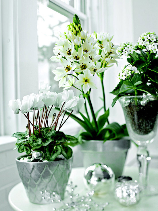 Winter flowering plants are beautiful as christmas decoration winter flowering plants are beautiful as christmas decoration mightylinksfo