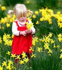 advice-on-care-of-daffodils-in-the-garden-and-potted-flowers-0-584