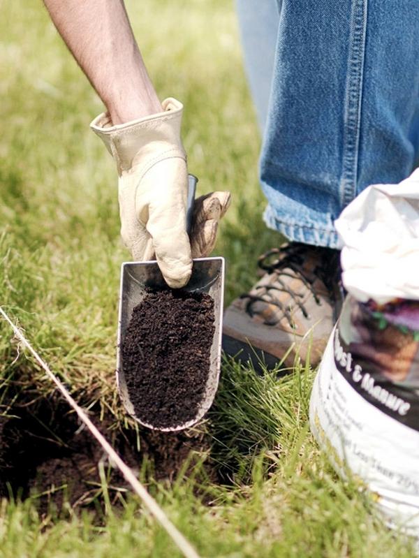 Grass in springtime - useful tips for gardeners