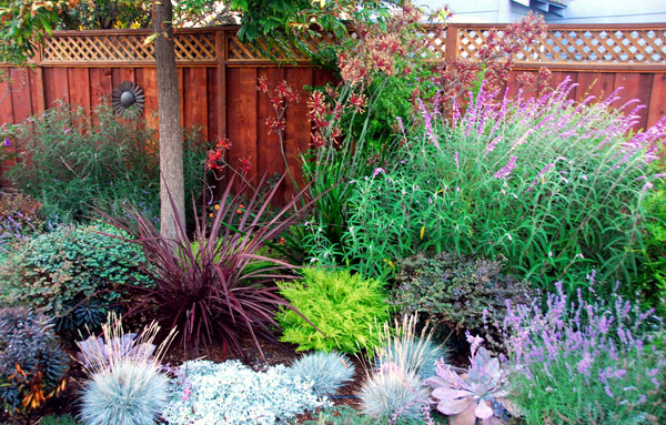 Money, time and saving water in the garden - summer saving tips