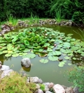 all-set-to-create-a-garden-pond-so-it-goes-step-by-step-0-631
