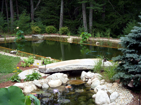 9 myths about organic swimming pond in the organic garden