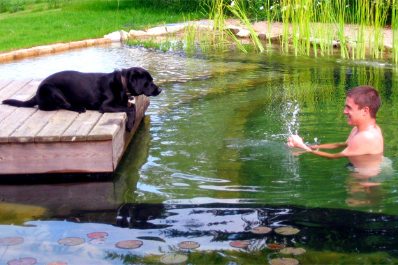 9 Myths About Organic Swimming Pond In The Organic Garden Interior Design Ideas Ofdesign