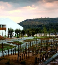 l39and-vineyards-modern-design-hotel-surrounded-by-vineyards-0-644