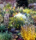 preparing-the-garden-for-winter-days-gardening-in-the-fall-0-659
