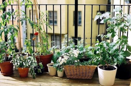Create creative ideas, including the small balcony garden