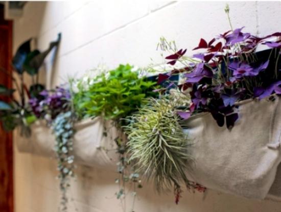Create creative ideas, including the small balcony garden