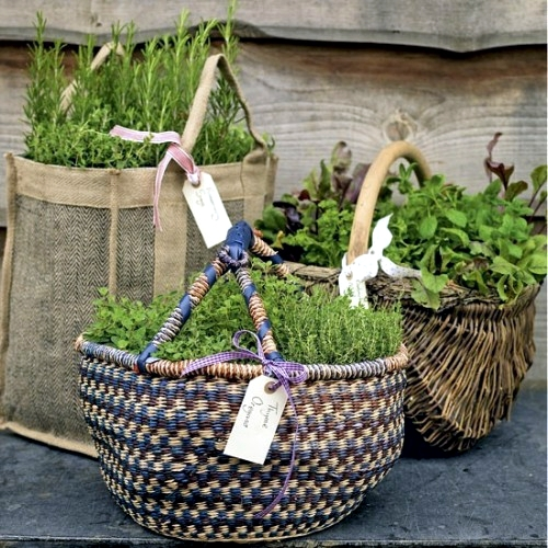 Creating a herb garden on the balcony Tips for planting and