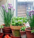 creating-a-herb-garden-at-home-what-to-consider-0-782