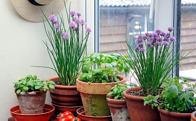 Creating A Herb Garden At Home What To Consider