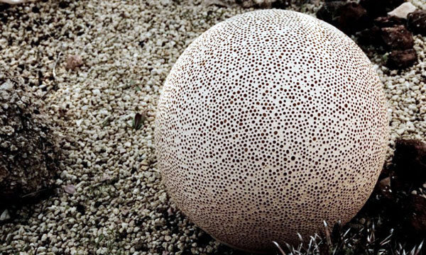 balloons garden design with an interesting porous texture