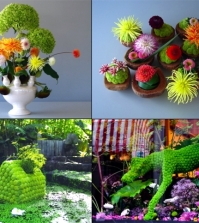 andreas-verheijen-developed-hybrid-plants-and-colorful-flower-arrangements-0-806