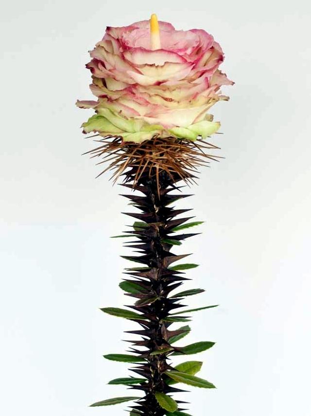 Andreas Verheijen developed hybrid plants and colorful flower arrangements