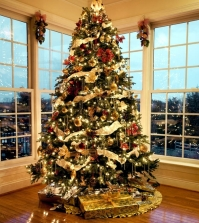 tips-for-installing-lights-on-the-christmas-tree-0-814