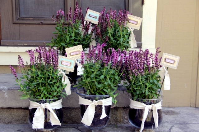 Care Tips lavender in the garden when you have to cut?