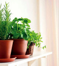 creating-a-herb-garden-garden-grow-inside-tips-for-cooking-herbs-0-852