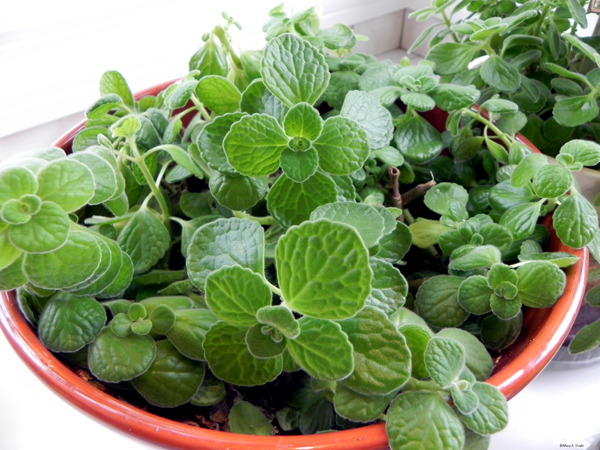 Creating a herb garden - garden grow inside tips for cooking herbs