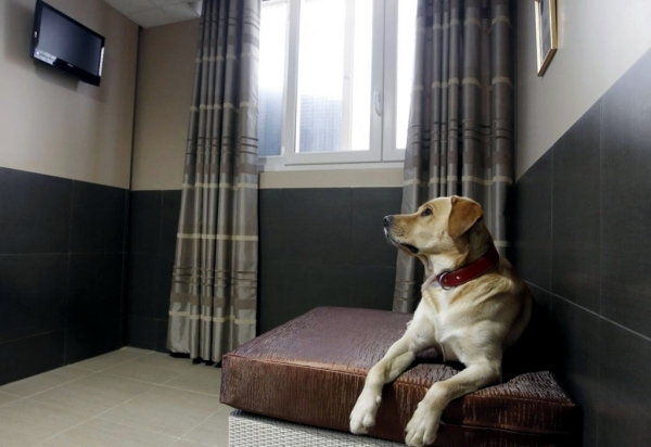 Hotel For Dogs Spoil Your Dog In A Kennel Interior