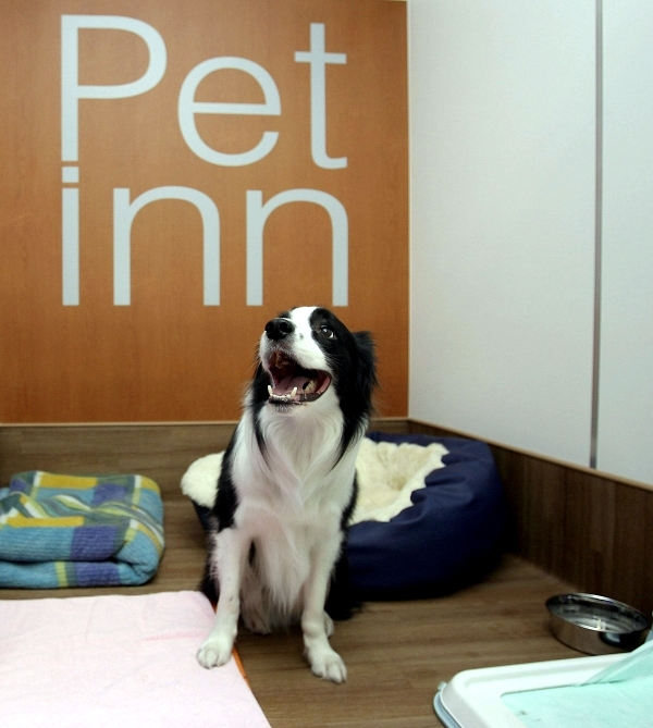 Hotel for Dogs - spoil your dog in a kennel