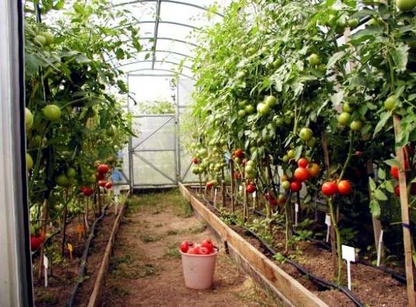 Captivating Accumulation Greenhouse   Advice For Home Gardeners To Grow Vegetables