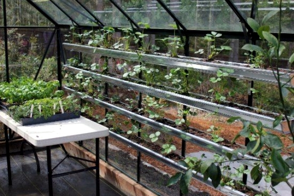 Accumulation Greenhouse   Advice For Home Gardeners To Grow Vegetables