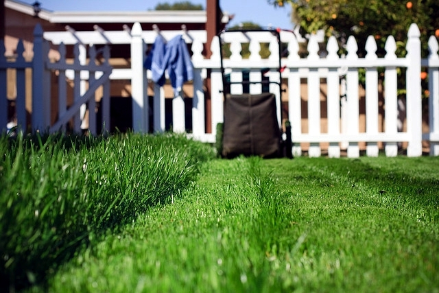 Tips for lawn care in the spring - when to mow