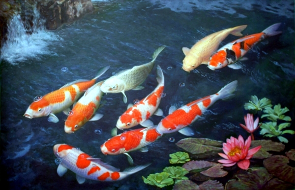 Creating a koi pond useful for design of water garden for Koi fish care