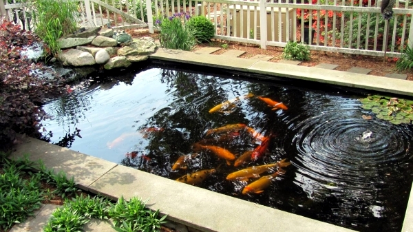 Creating a koi pond useful for design of water garden for Koi carp pond depth