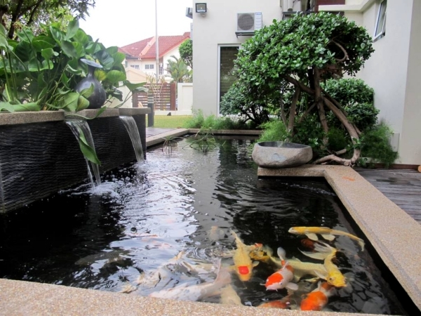 Creating a koi pond useful for design of water garden for Carp pond design